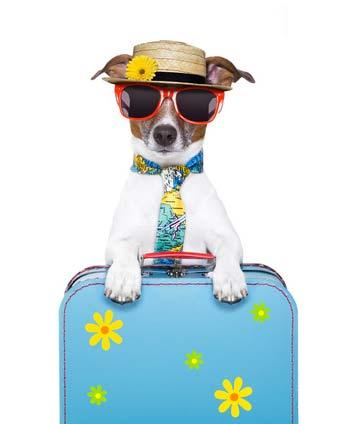 Urlaub mit Hund im Wohnmobil